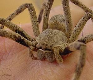 Rain-Spider2-300x257
